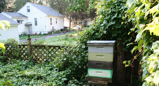 Would You Like A Beehive In Your Backyard Or Garden, But Do Not Want To  Personally Manage It? Let Us Care For Your Hive And Provide You With A  Taste Of ...