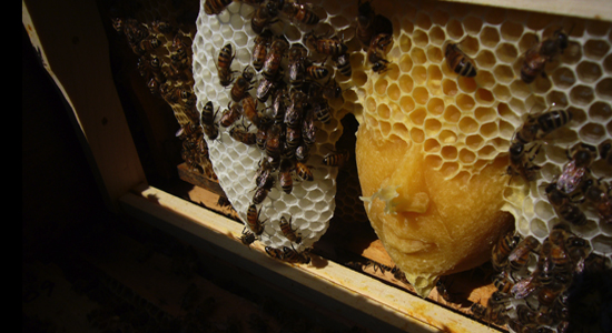 honeycomb-face